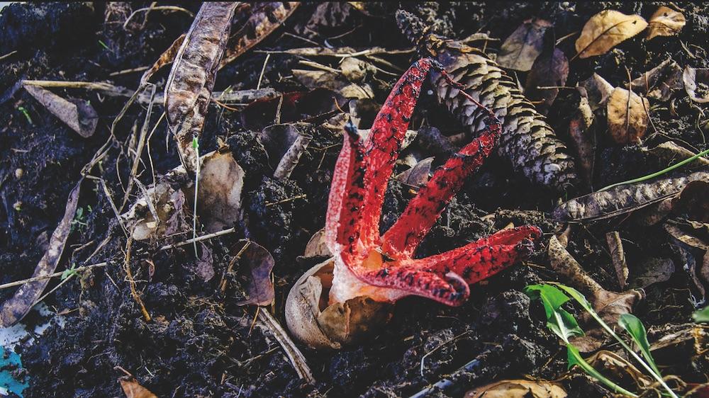 Bild: Neobiota – Natur im Wandel